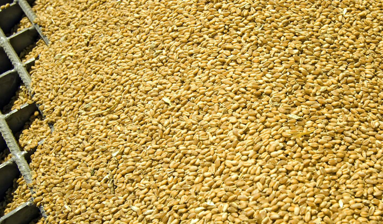 muovere-cereali-trasporto-pneumatico - cereali